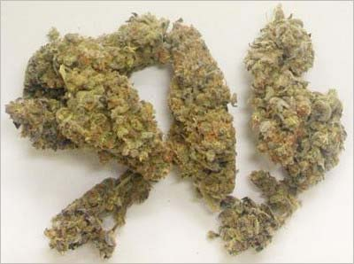 高樹沙耶の自宅から押収された乾燥大麻(約10グラム)