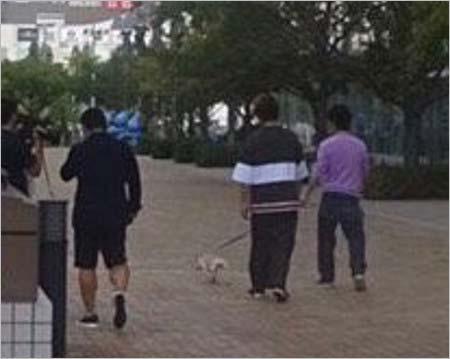 おじゃMAP!!が公開の犬散歩