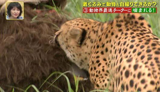 『坂上探検隊』狩野英孝がチーターと格闘シーン8枚目