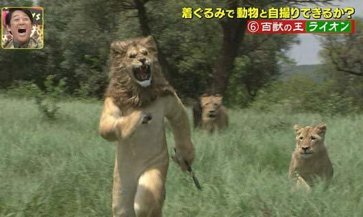 『坂上探検隊』狩野英孝がライオンと格闘シーン4枚目