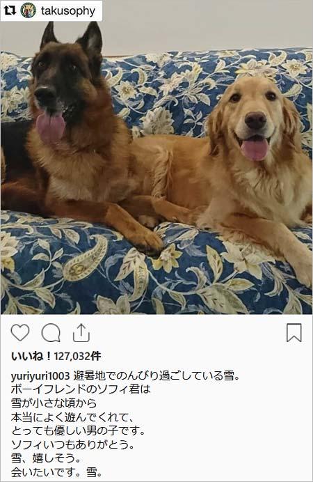 避暑地の那須高原にいる石田ゆり子と愛犬・雪ちゃん(ゴールデン・レトリバー)の画像