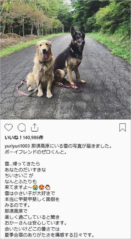 避暑地の那須高原にいる石田ゆり子と愛犬・雪ちゃん(ゴールデン・レトリバー)インスタグラム画像