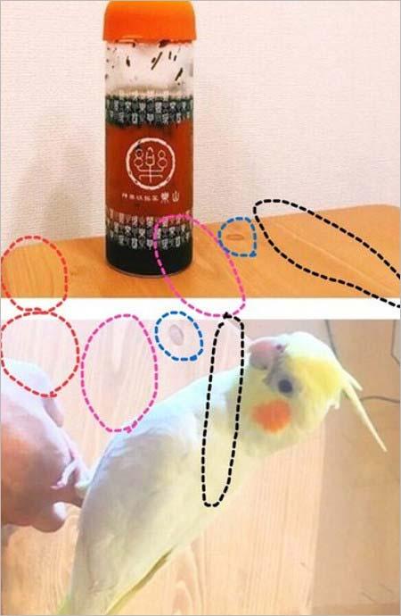 平野紫耀と平祐奈のテーブル木目一致検証画像